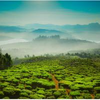 Cleartrip Flight Coupons Enabling You 3 Must Things to Do in Ooty